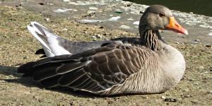 vögel wattenmeer nordsee